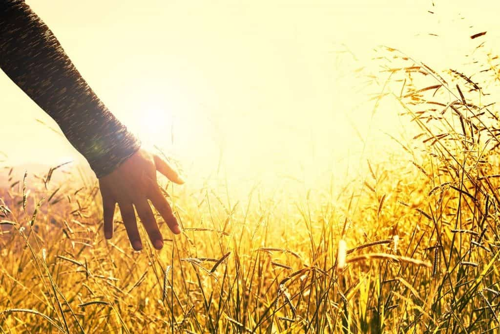 długi rolnika